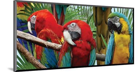 Macaws-Melinda Bradshaw-Mounted Art Print