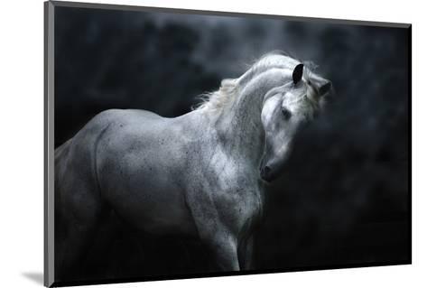 Moonlight Silver Stallion-Melanie Snowhite-Mounted Art Print