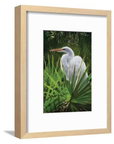 Palmetto Egret-Steve Hunziker-Framed Art Print
