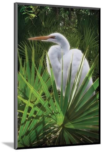 Palmetto Egret-Steve Hunziker-Mounted Art Print