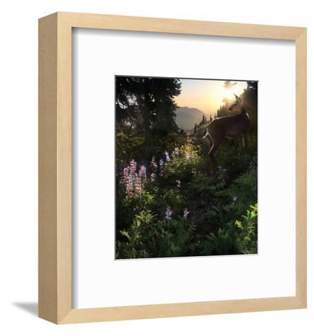 Deer Pass-Steve Hunziker-Framed Art Print