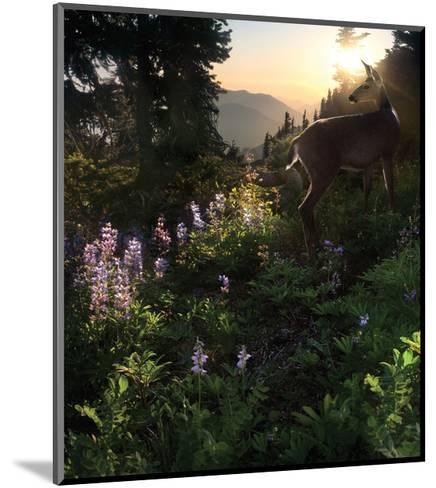 Deer Pass-Steve Hunziker-Mounted Art Print