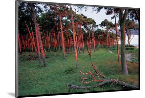 Natural Bark Erosion--Mounted Art Print