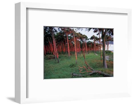 Natural Bark Erosion--Framed Art Print