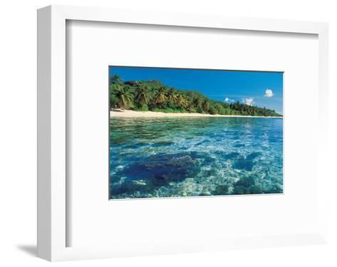 Corals in Clear Sea Water--Framed Art Print