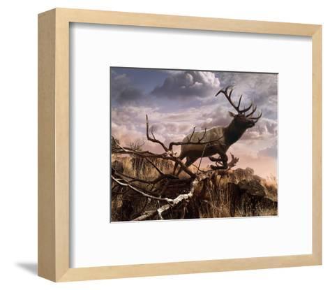 Elk Passage-Steve Hunziker-Framed Art Print
