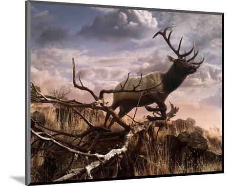 Elk Passage-Steve Hunziker-Mounted Art Print