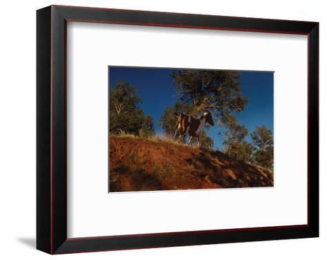 Ridge Runner-Steve Hunziker-Framed Art Print