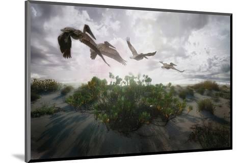 Sunset Pelicans-Steve Hunziker-Mounted Art Print