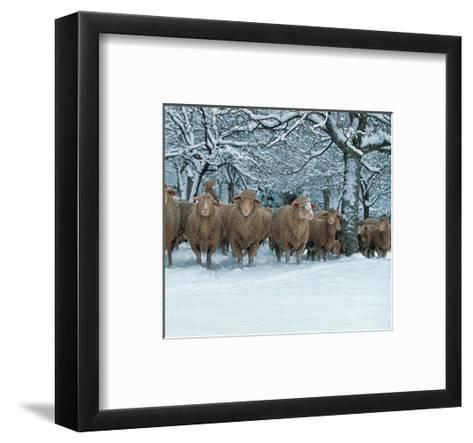 Winter Sheeps--Framed Art Print
