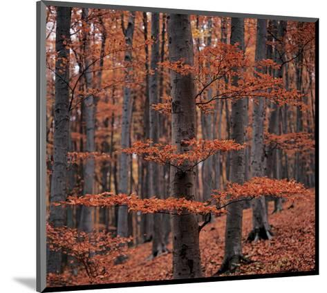 Autumn Forest Trees--Mounted Art Print