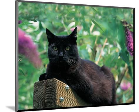 Black Cat Sitting On The Fence--Mounted Art Print