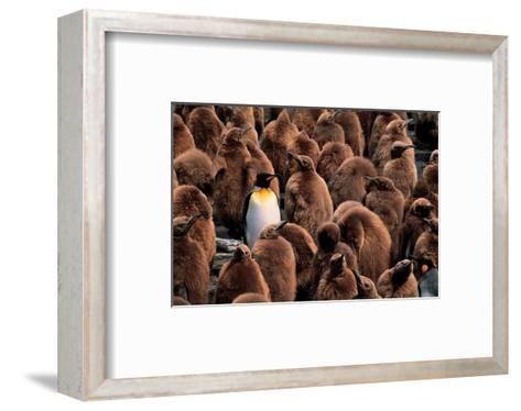 Emperor Penguin and Chicks--Framed Art Print