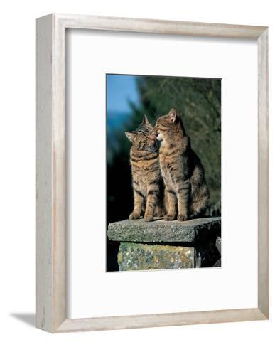 Two Cats On A Wall--Framed Art Print