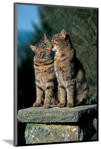 Two Cats On A Wall--Mounted Art Print