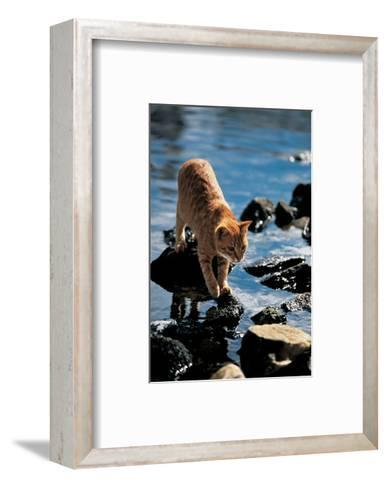 Cat Going From Stone To Stone--Framed Art Print