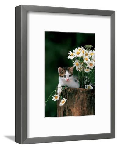Kitten With Camomiles--Framed Art Print