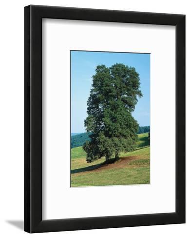 Basswood In The Medow--Framed Art Print