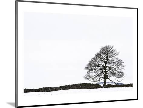 Snowy Peaks-Chris Farrow-Mounted Art Print