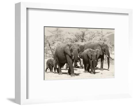 Elephants I-Chris Farrow-Framed Art Print