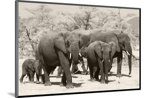 Elephants I-Chris Farrow-Mounted Art Print