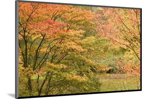Autumn Colour-Chris Farrow-Mounted Art Print