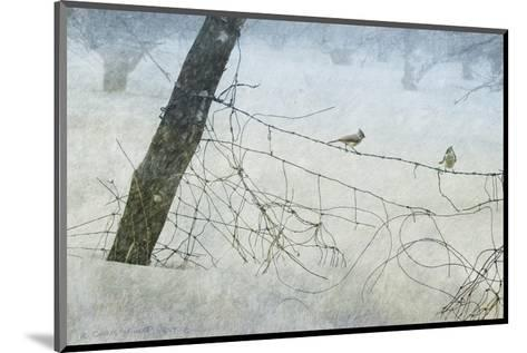 Old Fence Tangle-Chris Vest-Mounted Art Print