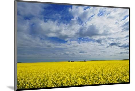 Canola and Graineries-Mike Grandmaison-Mounted Art Print