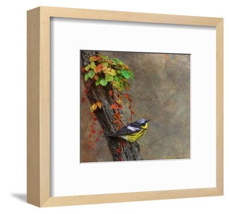 Magnolia Warbler-Chris Vest-Framed Art Print