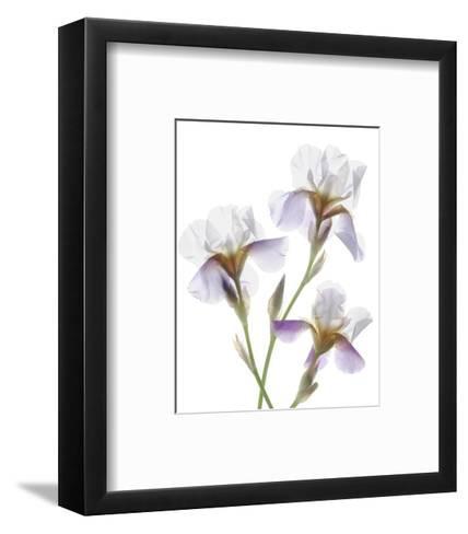 Shades of Purple Iris-Judy Stalus-Framed Art Print