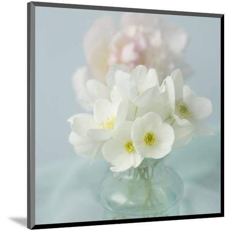 Little Bouquet of Anemones-Judy Stalus-Mounted Art Print