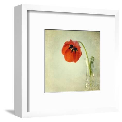 Red Tulip I-Judy Stalus-Framed Art Print