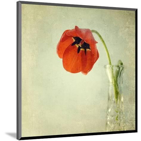 Red Tulip I-Judy Stalus-Mounted Art Print