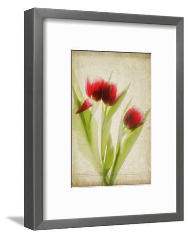 Red Tulips III-Judy Stalus-Framed Art Print
