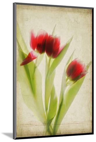 Red Tulips III-Judy Stalus-Mounted Art Print