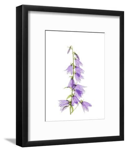 Ladybells-Judy Stalus-Framed Art Print