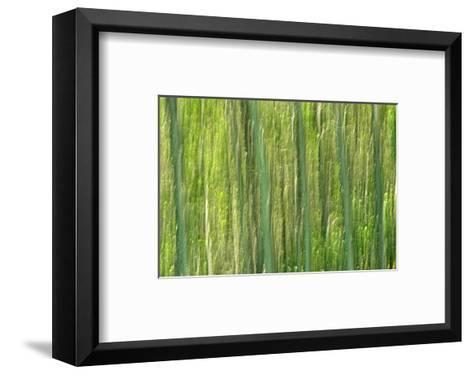 Tree Abstraction III-Mike Grandmaison-Framed Art Print