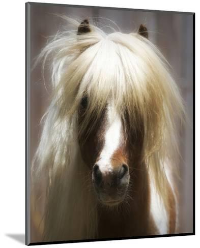 Shetland Pony-Melanie Snowhite-Mounted Art Print