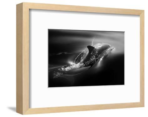 Black Dolphin-Steve Munch-Framed Art Print