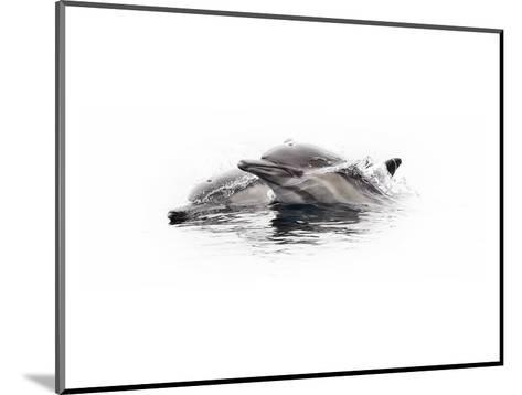 Curious Dolphin 1-Steve Munch-Mounted Art Print