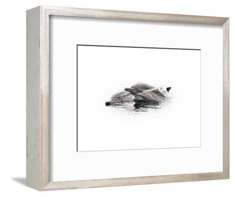 Curious Dolphin 1-Steve Munch-Framed Art Print