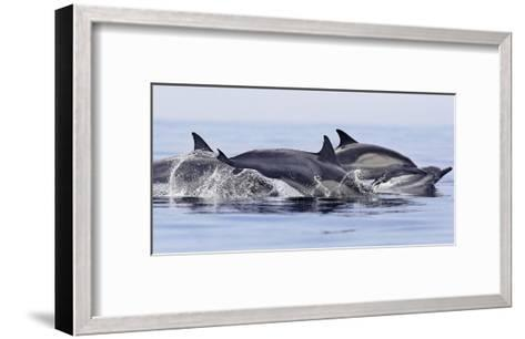 Dolphins at Play-Steve Munch-Framed Art Print