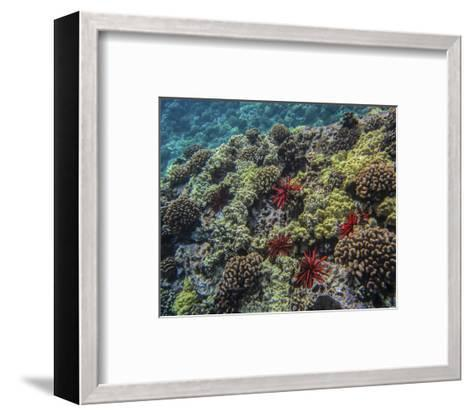 Dive Molokini-Michael Polk-Framed Art Print
