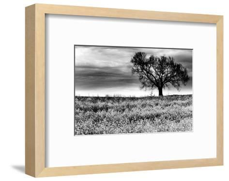 Tree in a Field, Severville, Tennessee--Framed Art Print