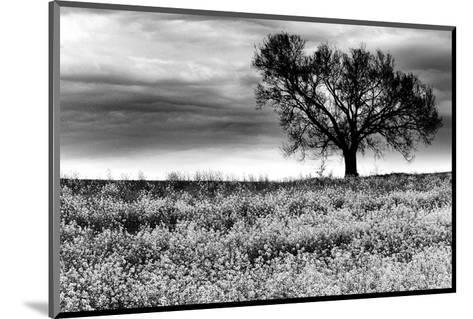 Tree in a Field, Severville, Tennessee--Mounted Art Print