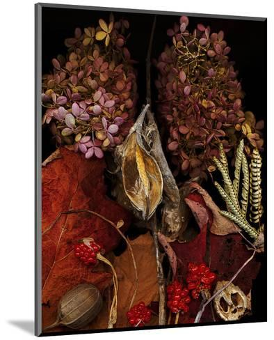 Dried Leaves hydrangea--Mounted Art Print