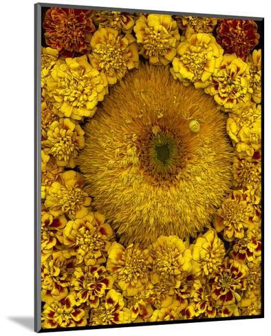 Golden Garden Sunflowers & Marigolds--Mounted Art Print