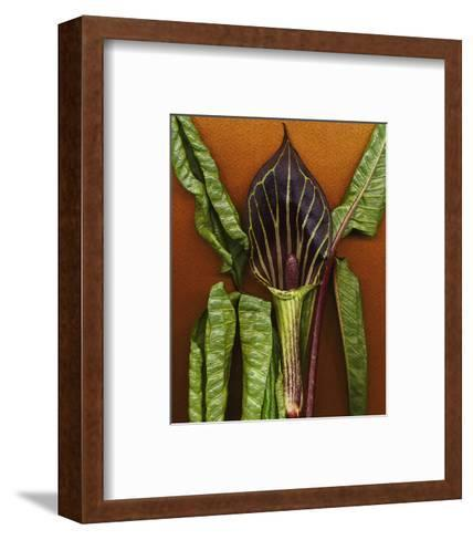 Green Wildflower--Framed Art Print