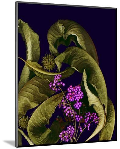 Autumn leaves purple--Mounted Art Print