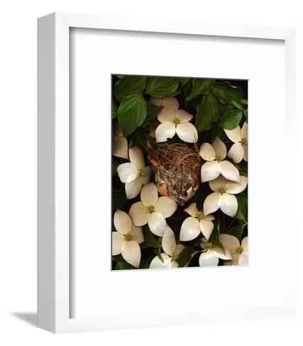 Bird nest kousa dogwood--Framed Art Print